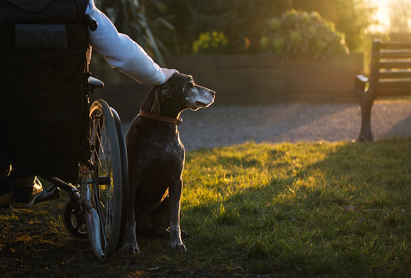 Assistance Dogs and Dog Charities 1st Place Winner, Michael Higginson ©, UK