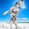 Dogs at Play 3rd Place Winner, Daniel Nygaard ©, Sweden
