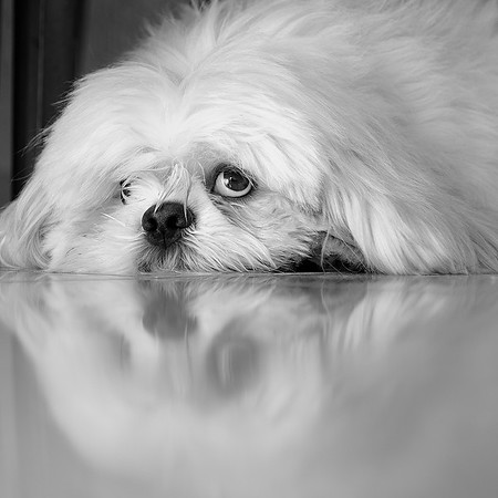 Dog Portrait 3rd Place Winner, Rogerio Arajuo ©, Brazil