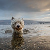 Dogs at Play 1st Place Winner, Tom Lowe ©, UK
