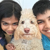 I Love Dogs Because ... (under 18) 2nd Place Winner, Advait Huggahalli ©, USA