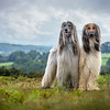 Dog Portrait 1st Place Winner, Jamie Morgan ©, UK