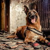 Dogs at Work 2nd Place Winner, Robert James Dray ©, UK