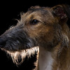Judges Mention, Dog Portrait Alistair Cox, UK