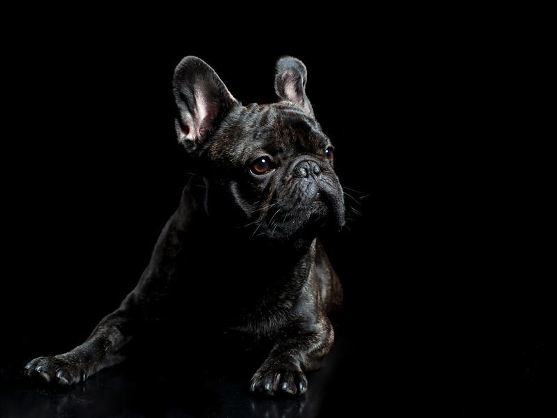 Judges Mention, Dog Portrait, Marie de Verdier Persson ©, Sweden