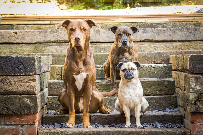 Judges' Mention, Rescue Dog Charity, Victoria Watts ©, UK