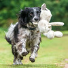 Dogs at Play 3rd Place Winner, Will Holdcroft ©, UK