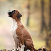 Puppies 1st Place Winner, Mirjam Schreurs ©, Netherlands