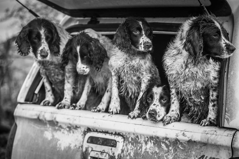 Dogs at Work 2nd Place Winner, Lucy Charman ©, UK