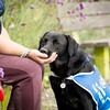 Assistance Dogs Charity 3rd Place Winner, Julie Morrish ©, UK