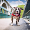 Rescue Dogs Charity 3rd Place Winner, Kaylee Greer ©, USA