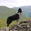 Judges' Mention, I Love Dogs Because...(aged 12 to 17), Molly Wallis ©, UK