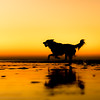 Rescue Dogs Charity 2nd Place Winner, Martin Tosh ©, UK