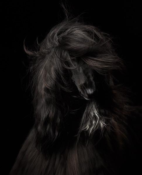 Portrait 1st Place Winner, Anastasia Vetkovskaya ©, Russia