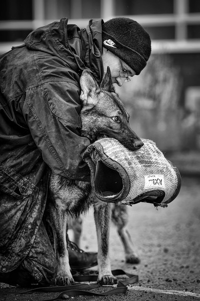 Dogs at Work 3rd Place Winner  Ian Squire, United Kingdom