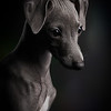 Puppies Category 1st Place Winner  Klaus Dyba, Germany