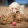 Judges' Special Mention Dogs at Play category Darren Hall, United Kingdom