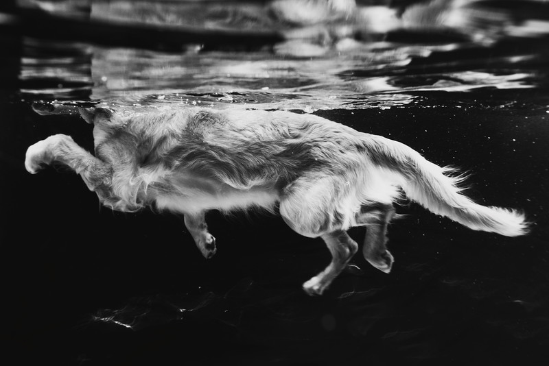Judges' Special Mention Dogs at Play category Leslie Plesser, United States of America