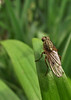 Fly on the Lookout<br /> Sondra Barry<br /> <br /> 1st Place - Nature