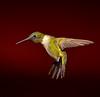 37 - Hummingbird tail tucked - Award - by David Birmingham