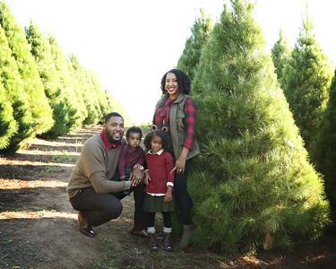Tree Farm sessions