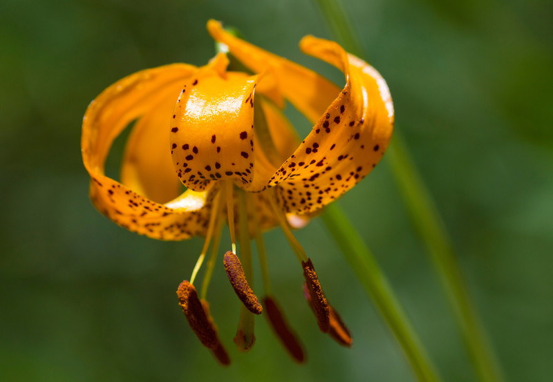 What's up Tiger Lily 2012
