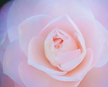 http://tinyurl.com/SpringFlingPhotos