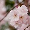 """<a href=""""http://tinyurl.com/SpringFlingPhotos"""">http://tinyurl.com/SpringFlingPhotos</a>"""
