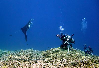 divers and manta (ダイバー達とマンタ)