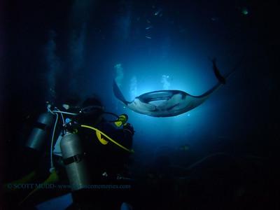 divers and night manta (ダイバー達とナイトマンタ)