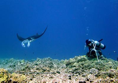 divers and manta (ダイバーとマンタ)
