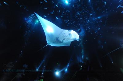 manta night dive(マンタナイトダイブ)