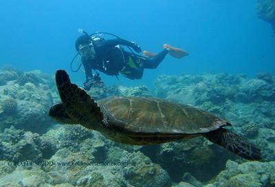 ダイバーとアオウミガメ (diver and green sea turtle)
