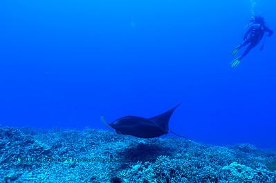 manta and diver (マンタとダイバー)