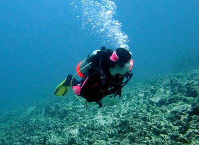 ダイバー (diver)