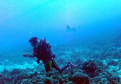diver and eagle ray (だいばーとマダラトビエイ)
