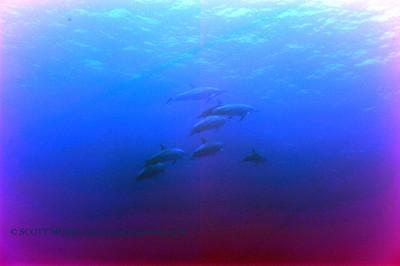 dolphins (イルカ達)