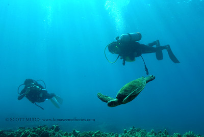 divers and turtle (ダイバー達と亀)