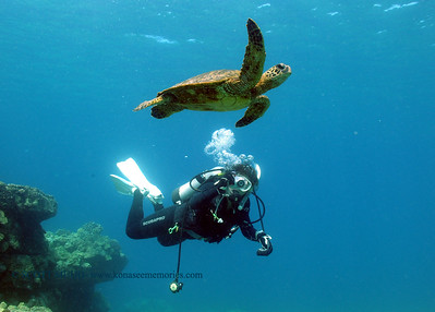 diver and turtle (ダイバーと亀)