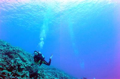 diver (だいばー)