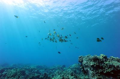 butterflyfish (チョウチョウウオ達)