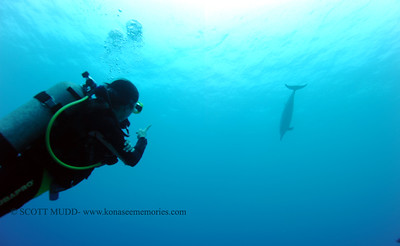 diver and spinner dolphin(ダイバーとハシナガイルカ)