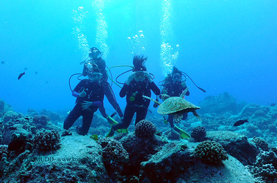 divers and hawksbill turtle (ダイバー達とタイマイ亀)