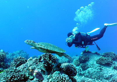 diver and hawksbill turtle (ダイバーとタイマイ亀)