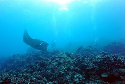 manta and divers (マンタとダイバー達)
