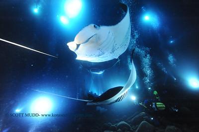 manta night dive (マンタナイト)