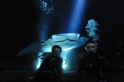 manta night dive (マンタナイトダイブ)