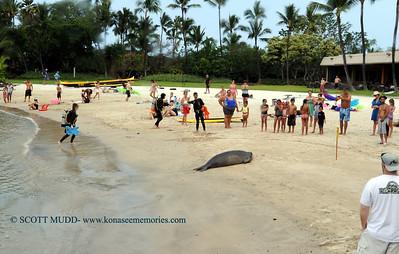 divers and monk seal (ダイバー達とハワイアンモンクシール)