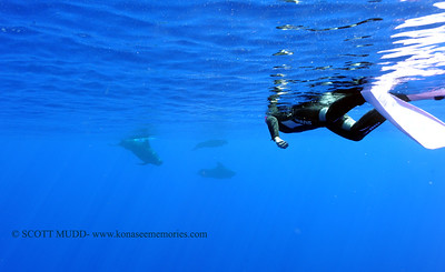 snorkeler and oceanic whitetip (スノーケラとヨゴレザメ)