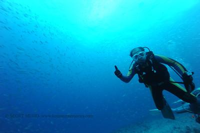 diver bigeye scad (ダイバーとメアジ)